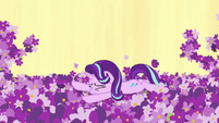 Starlight Glimmer falls in the lavender patch S7E10