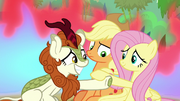 Fluttershy and Autumn Blaze shake hooves S8E23