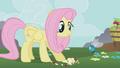Fluttershy feeds a parasprite S01E10.png