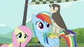 Fluttershy, Rainbow Dash and the falcon S2E07.png