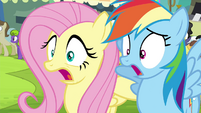 Fluttershy and Rainbow Dash gasp S4E22