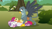 Gabby pounces on the Cutie Mark Crusaders S6E19