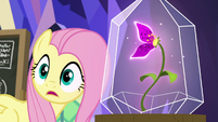"Fluttershy ""birds or insects I've talked to"" S9E22"