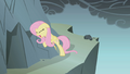 Fluttershy clings to a rock S1E07.png