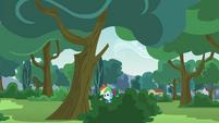 Rainbow Dash in a bush EG3