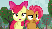 Apple Bloom and Babs looking S3E08