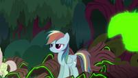 Clone of Rainbow Dash is born S8E13