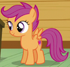 Scootaloo ID
