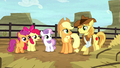 "Braeburn asking ""you fillies alright?"" S5E6.png"