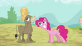 Pinkie Pie Happy For Cranky S02E18.png