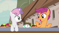 Scootaloo -I don't know anypony here- S7E8