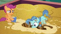Petunia Paleo vigorously digging through the sand S6E19