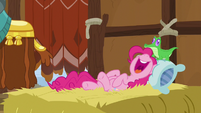 Pinkie Pie sleeping like the yaks S7E11