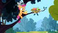 Scootaloo and birds S2E23.png