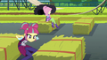Sour Sweet and Fluttershy jumping over hay bales EG3.png