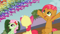 Apple Bloom and Babs wowza S03E08.png