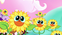 Living sunflowers smiling cutely S5E13