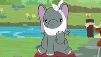 Muriel the elephant with her trunk in a cast S9E18