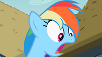 Rainbow Dash surprised S2E08