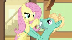 S06E11 Fluttershy stawia bratu warunek