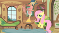 Fluttershy always works S01E22.png