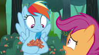 Rainbow Dash looks at berries in her hooves S7E16