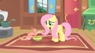201px-Fluttershy and Philomena2 S01E22