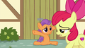 "Apple Bloom ""good luck at the recital"" S6E4.png"