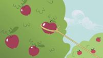 Applejack lassoes an apple S1E06