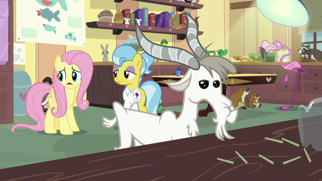 "File:Fluttershy ""all these poor little animals are hurt"" S7E5.png"