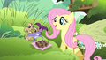 Fluttershy sees birds dropping acorns S4E14.png