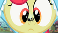 Apple Bloom with bee on nose 2 S2E12.png