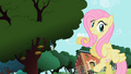 Fluttershy pointing at the tree S2E07.png