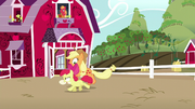 Applejack and Apple Bloom having fun together S5E17