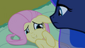 Fluttershy 'Perfect, lesson over' S2E4.png