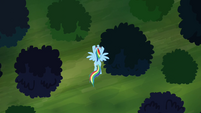 Rainbow Dash flying over the forest S4E04