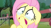 S04E14 Płacząca Fluttershy