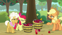 Apple Bloom and Goldie narrow eyes at AJ S9E10