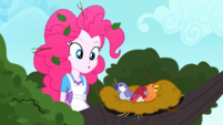 Pinkie Pie discovers the nest of birds SS10