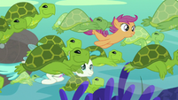 Scootaloo and Terramar swim with sea turtles S8E6