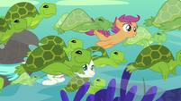 Scootaloo and Terramar swim with sea turtles S8E6