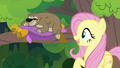 "Fluttershy ""believe in our dreams"" S7E5.png"