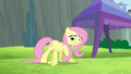 Fluttershy trying to do wing-ups S4E10.png