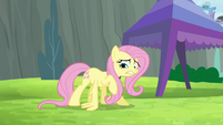 Fluttershy trying to do wing-ups S4E10