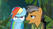 Quibble continues to complain about Daring Do S6E13