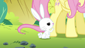 Angel getting Fluttershy's attention S4E18.png
