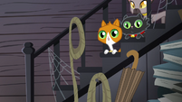 Cats on the staircase S4E09