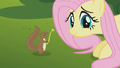Squirrel with dandelion stem S1E10.png