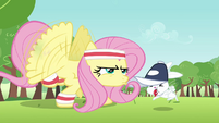 Angel helping Fluttershy S2E22