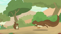 Squirrel returning to its den S8E23